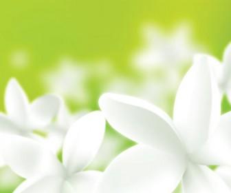Fresh Flower Vector Illustration