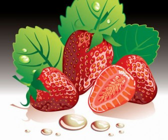 stock fruit vector – strawberries
