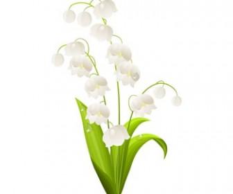 Green Leaf Spring Flower White