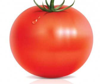 Tomato vector art