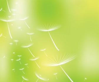 Dandelions illustration